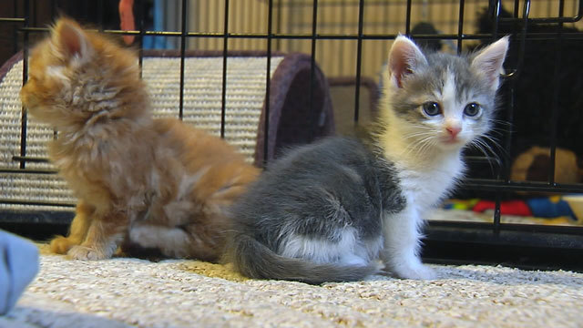 Couple: Florida realtor used home for cat rehab, tried to cover smell