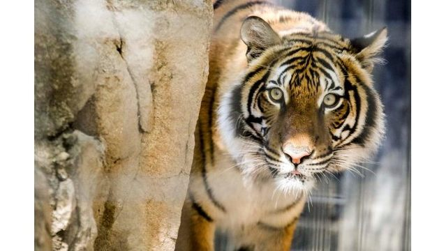 Family donates $5M to Zoo Knoxville