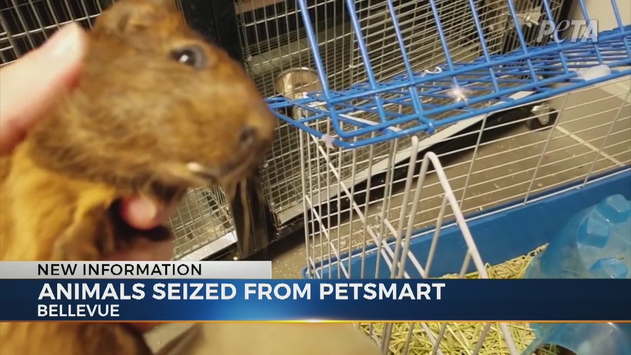 new bellevue petsmart raided after allegations of neglect surface