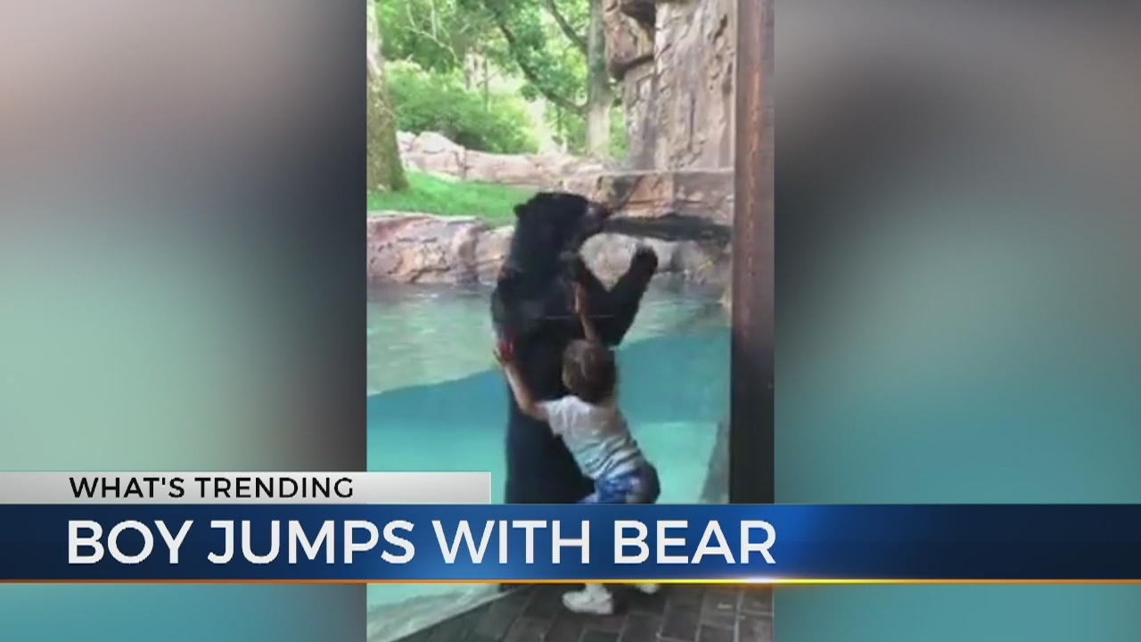 4cdb56d17b0f Andean bear jumps for joy at Nashville Zoo