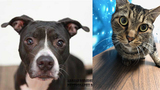 Pets of the Week for Dec. 11, 2018