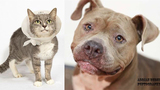 Pets of the Week for Dec. 18, 2018