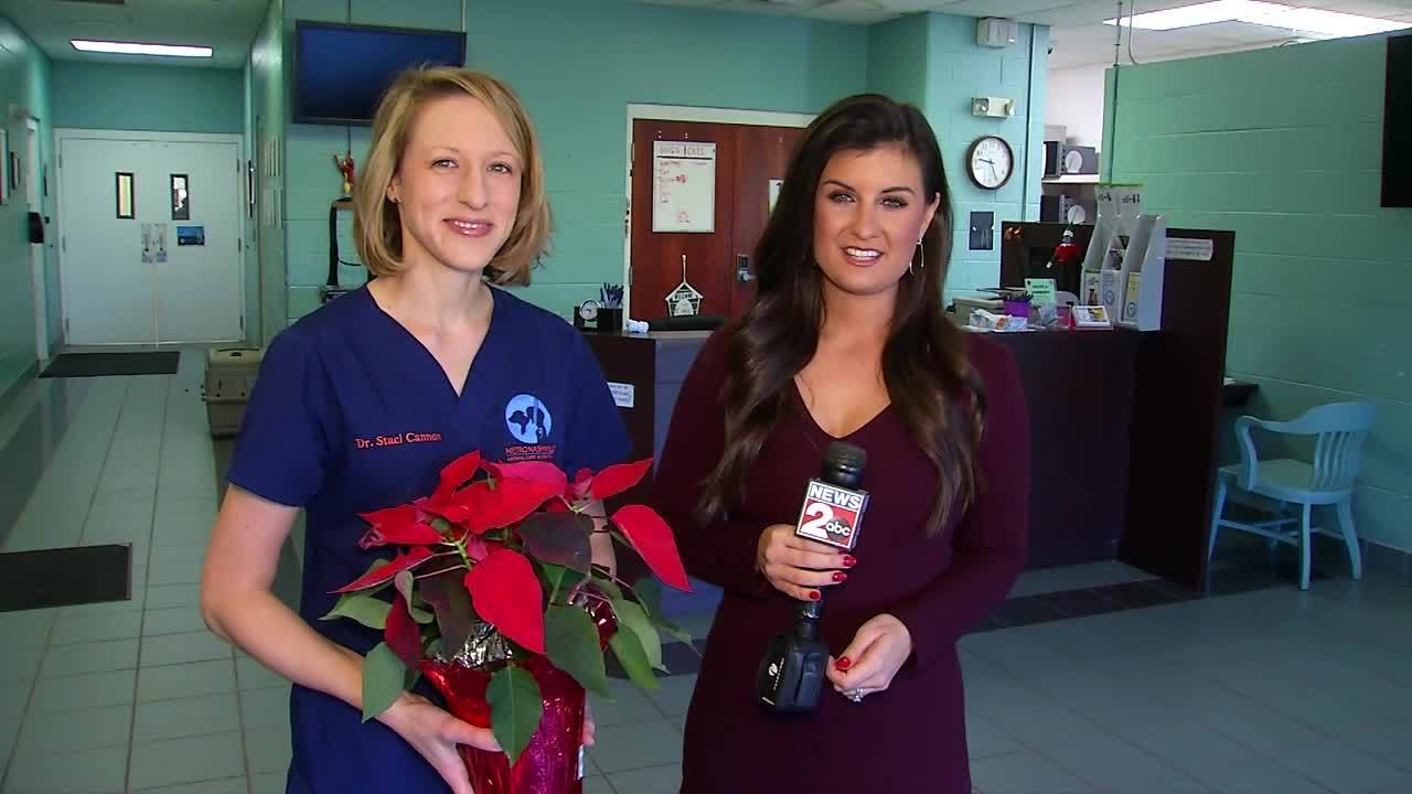 Pet Doc with Nikki Burdine: Toxic plants at the holidays