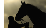 Vet warning Tennessee owners after 4 horses infected with EIA
