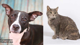 Pets of the Week for March 5, 2019