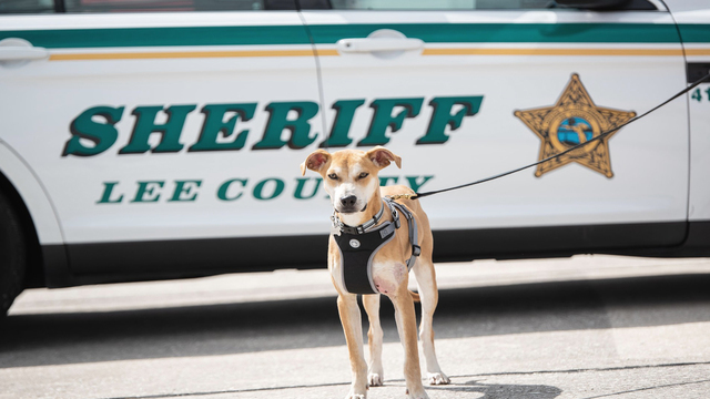 Dog found with mouth taped shut becomes Florida K9 deputy