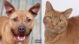 Pets of the Week for March 12, 2019