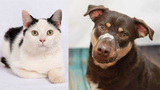 Pets of the Week for March 19, 2019