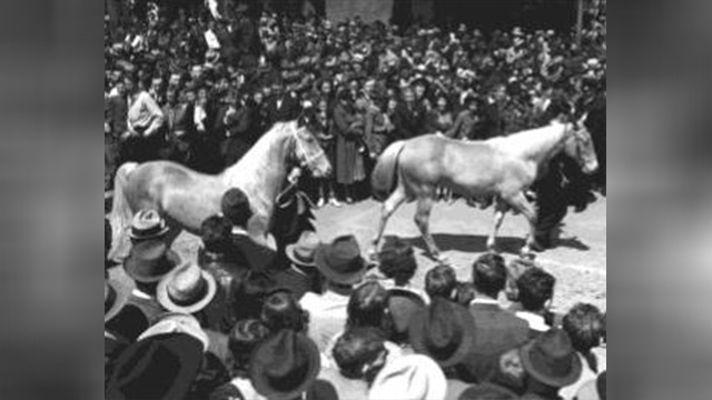 Mule Day 1939 image 10