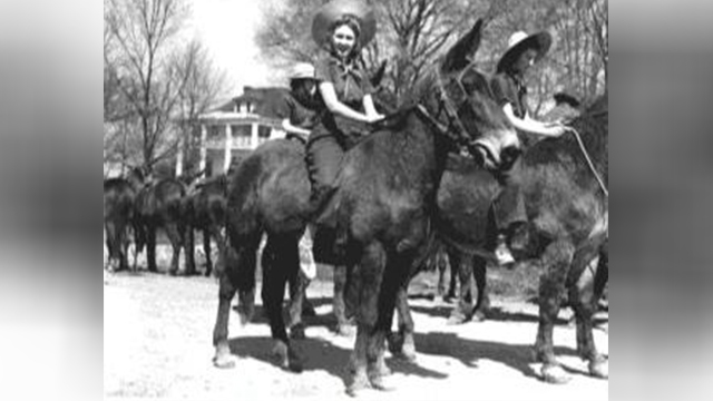 PHOTOS: Maury County's Mule Day back in 1939