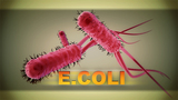 CDC: Mysterious E. coli outbreak sickens 72 people across 5 states, including TN & KY