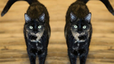 POLL: Would you pay to clone your pet?