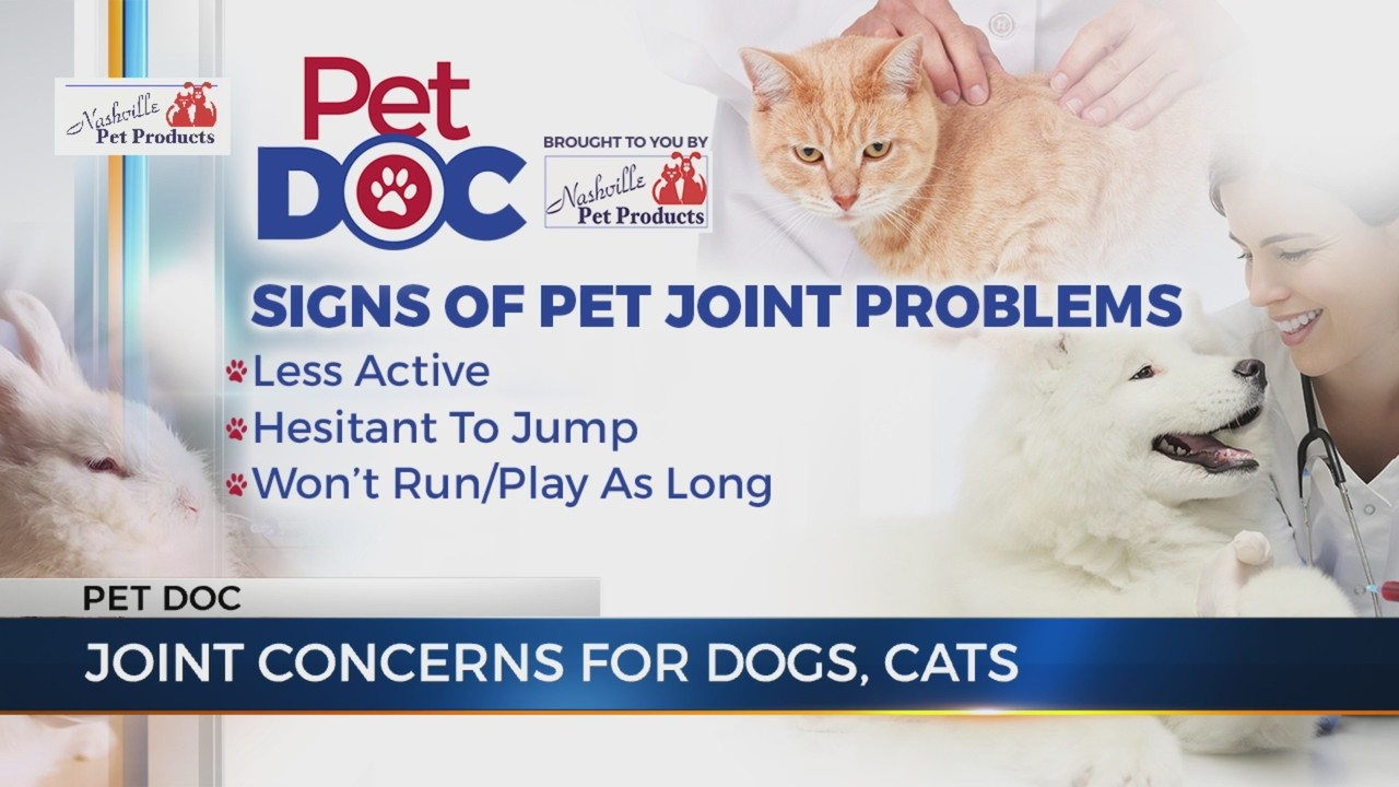 Joint pain in dogs and cats