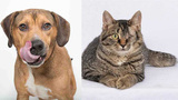 Pets of the Week for April 30, 2019