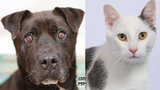 Pets of the Week for May 14, 2019