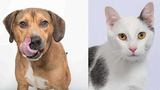 Pets of the Week for May 21, 2019